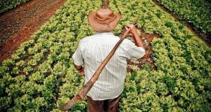 Aberto edital para aquisição de alimentos da agricultura familiar